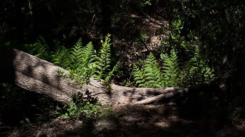 Yosemite__MG_5423.jpg