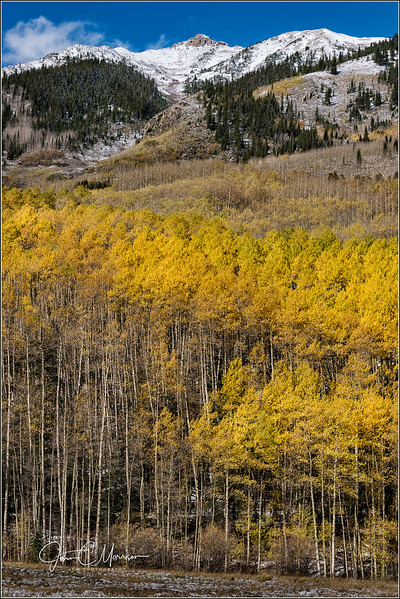 JM8_8515 Aspens and Mtn LPN r2.jpg