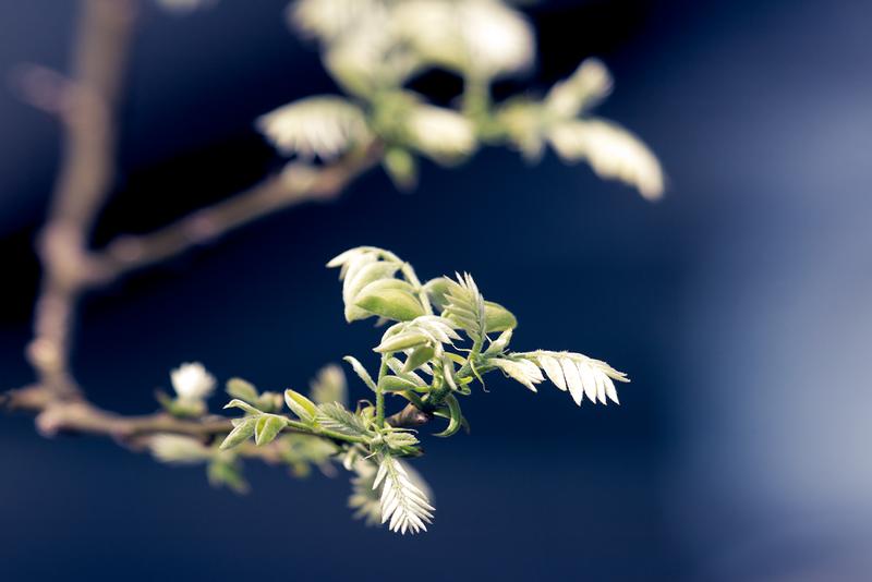 20120323_Leaves.jpg
