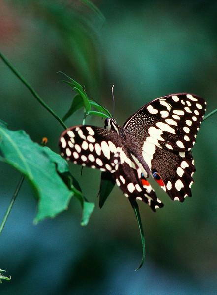 butterfly4.jpg
