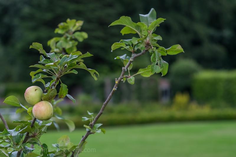 Hob Green garden-53.jpg