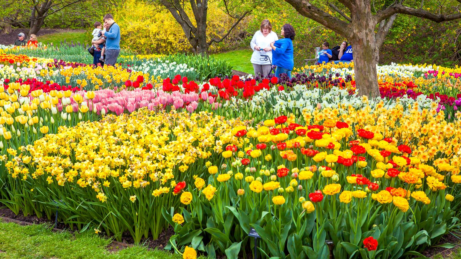 费城长木公园,春游的人气