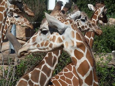 Zoo- June 2015