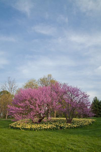 Spring13-0249.jpg