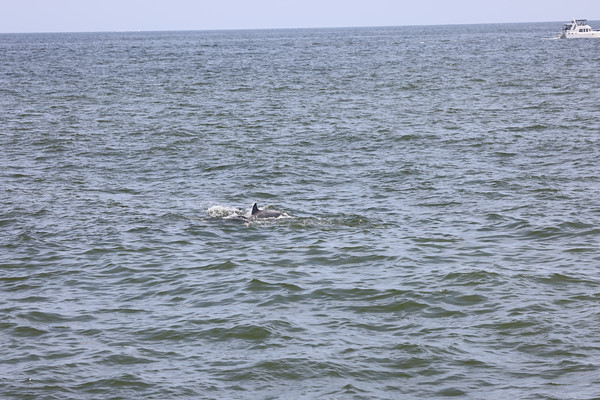 WHALE MOM AND CALF jULY 2021