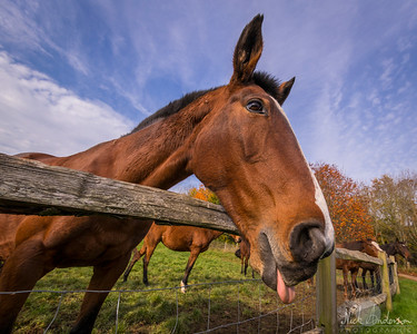 Equine Shoot