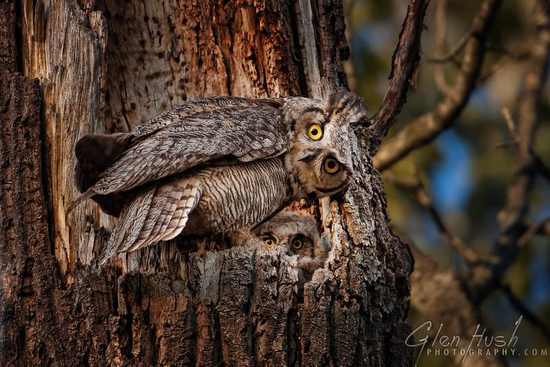 Wildlife - Winged