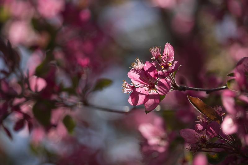 KoRedfield-Floral03.jpg