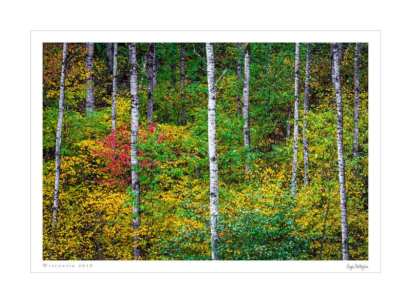 Northern Wisconson framed (60 of 74).jpg