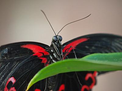 Boston Butterfly Garden