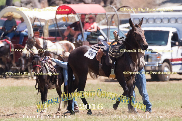 Sunday Snowy River And Mule Races