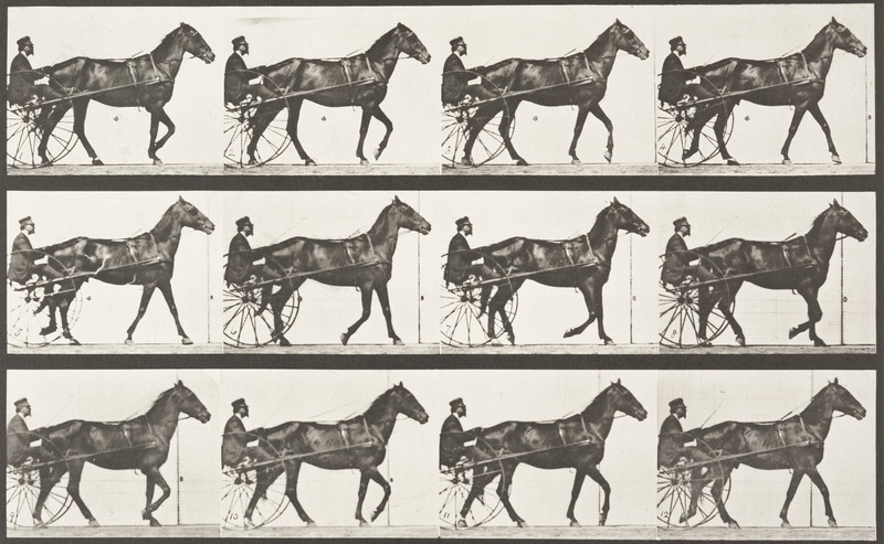 Horse Reuben walking, harnessed to sulky with driver (Animal Locomotion, 1887, plate 588)