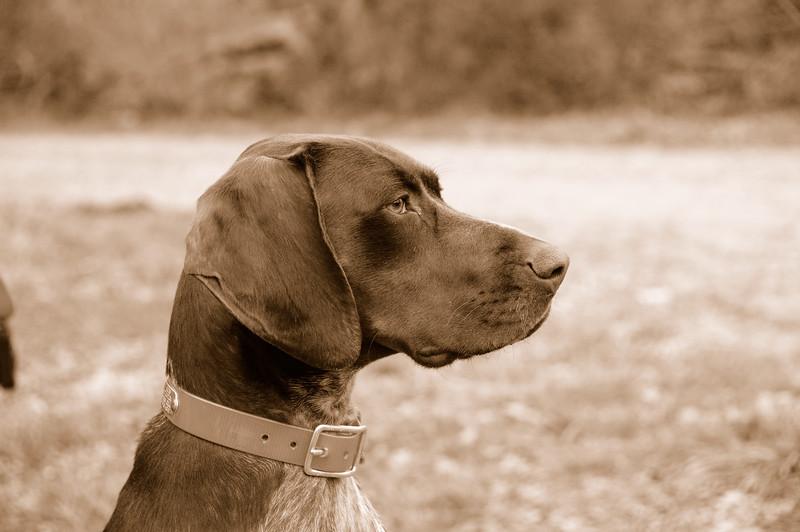 Morgen - Profile - Sepia.jpg