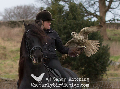 Friesians & Falcons Feb 2015