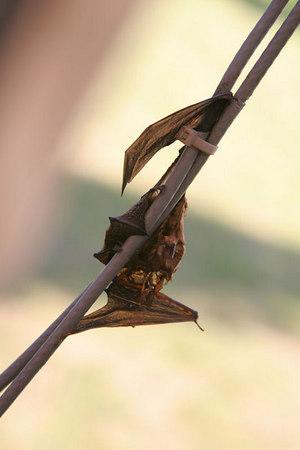 Sad Little Bat