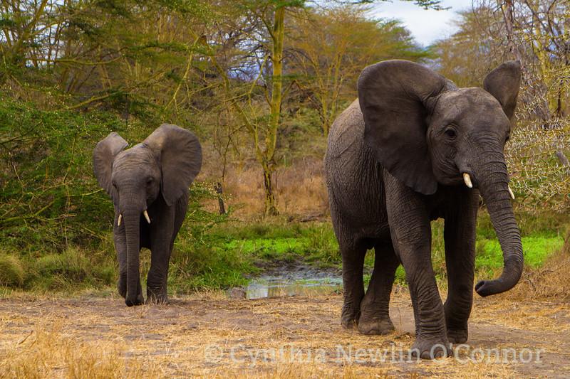 Elephants Lament.JPG