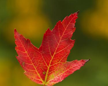 Fall Colors II 2012