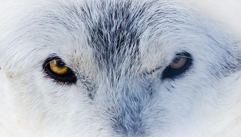 Wolf Eyes 091816-9369.jpg