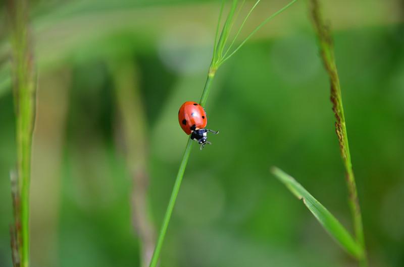 Ladybug. Rudnica Trail (route 22)