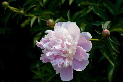 Flowers_garden_jun_13