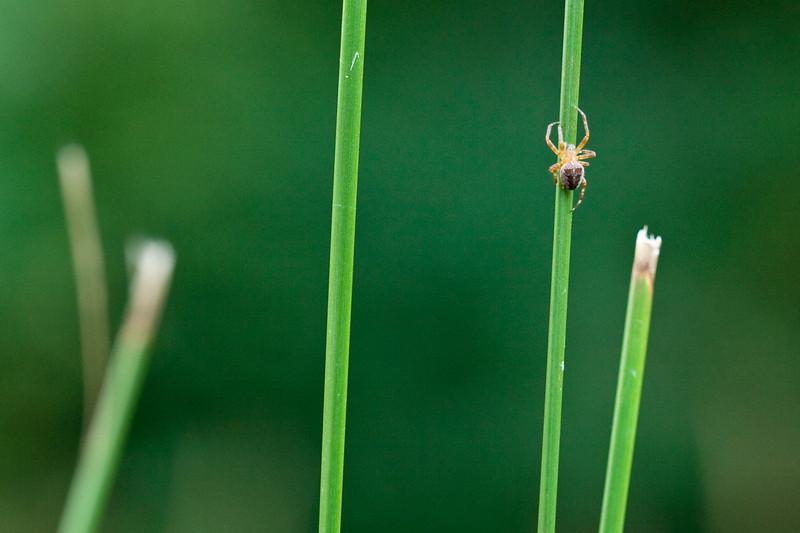 Garden spider on stalk at hatchery