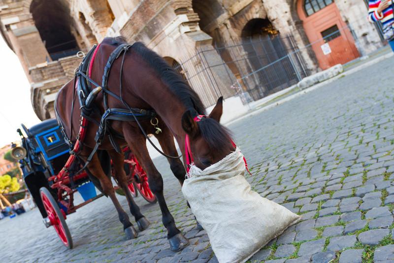 Self-fed horses.
