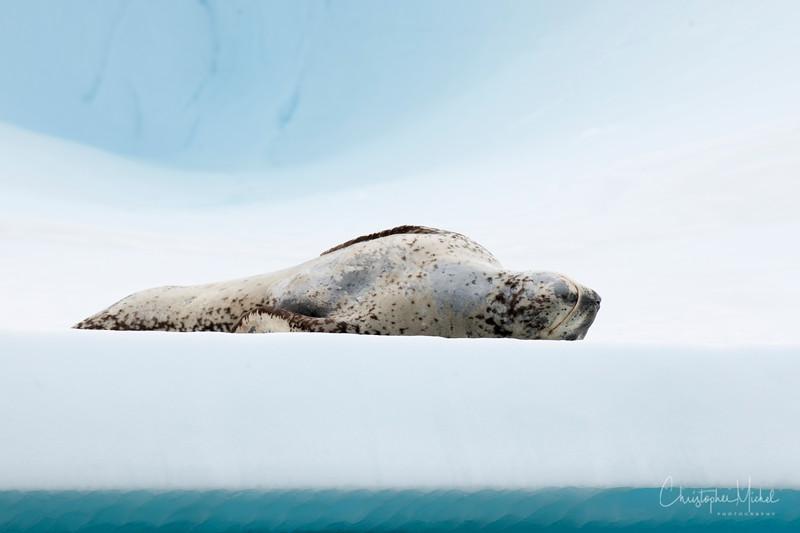 icebergs pleneau island_d3x_20130106_8652.jpg