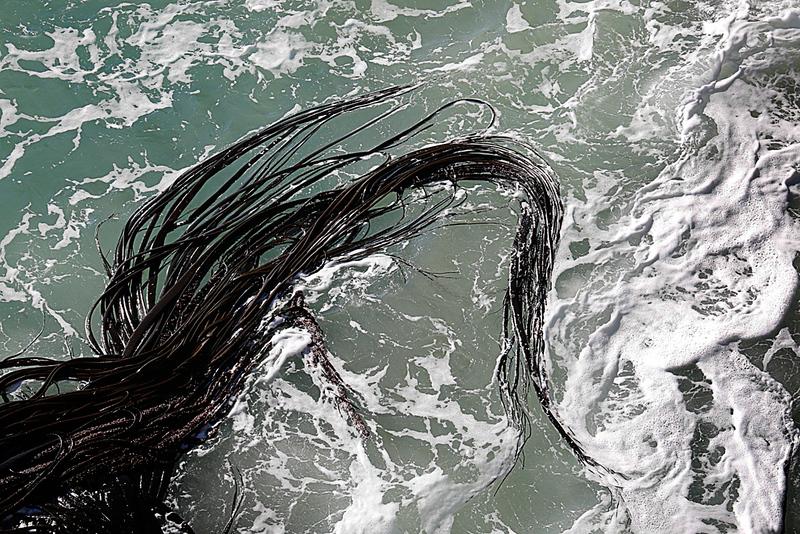 Seaweed Patterns.jpg
