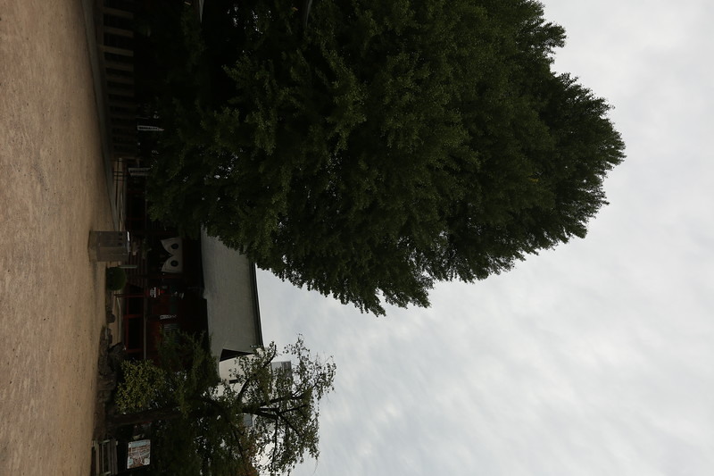2Y1A3001.JPG