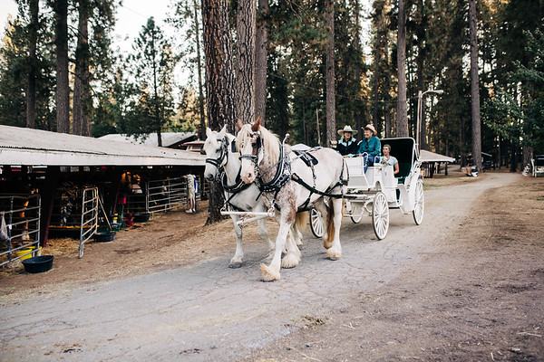 Easy Find Draft Horse Classic