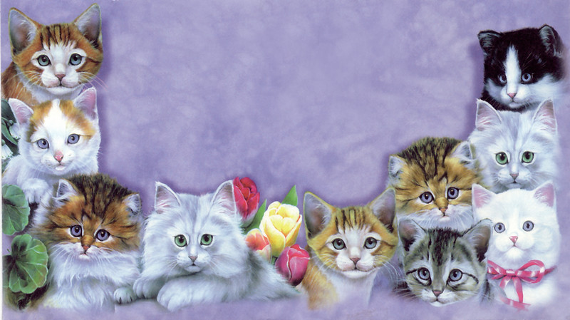 colorful cats.jpg