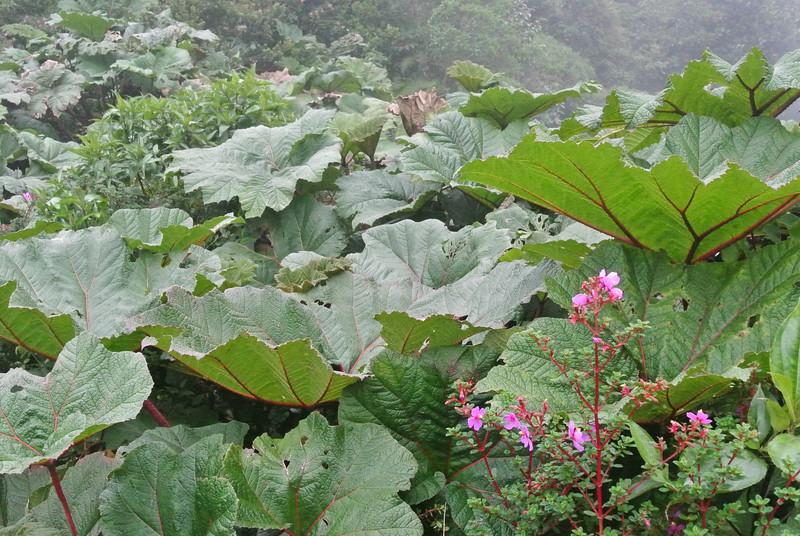 2012_Costa_Rica_December_  0029.JPG