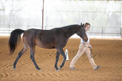 Horse 496