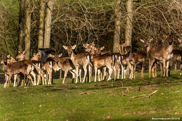 Deer - Set 8