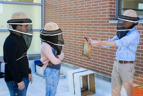 Science_Biology _Gilley Bees 10_16
