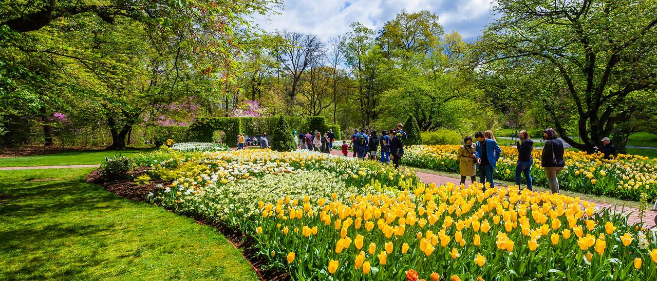宾州长木公园,春风吹开郁金香