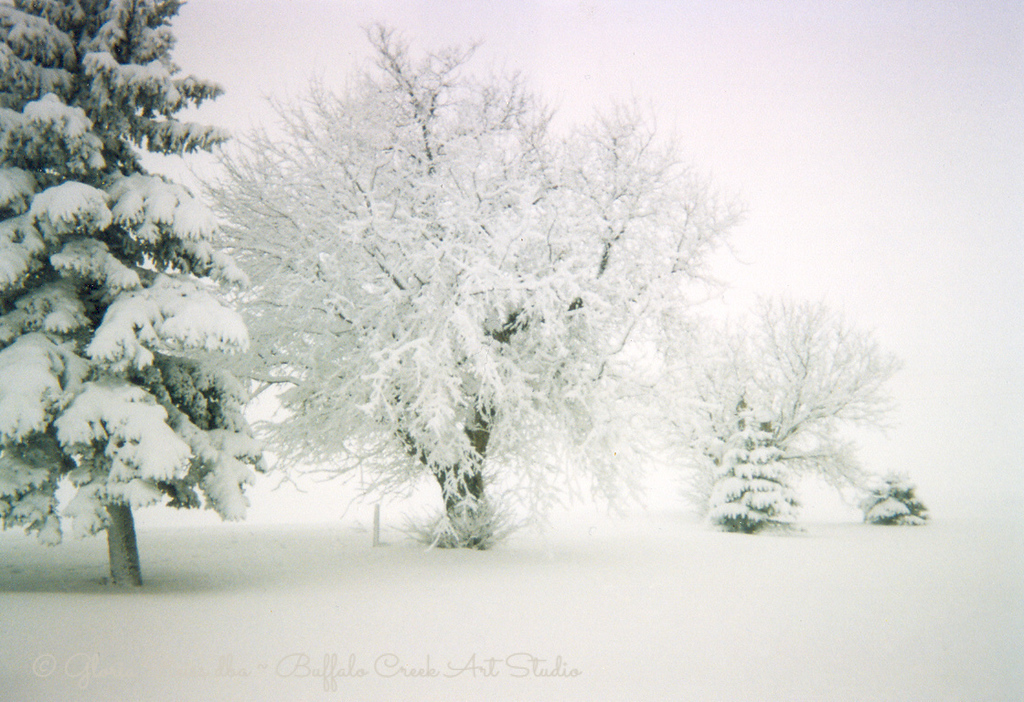 snow on the branches, and snowing heavily on the prairie