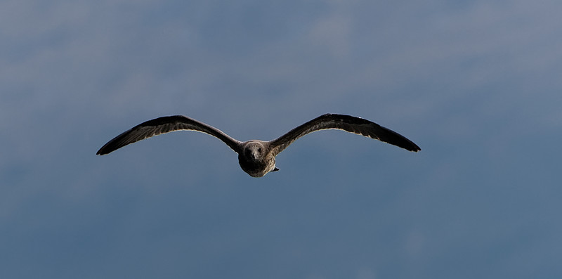 Albatross Soars in Doubtful Sound