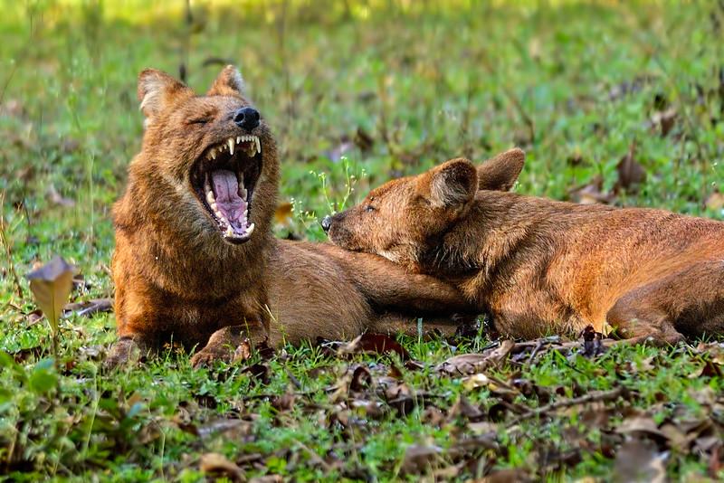 Wild-Dogs-arsenal.jpg