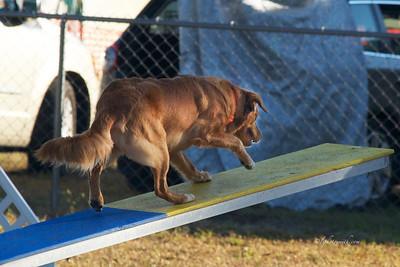 Rabbit Run LLC  Lure Coursing and  Barn Hunt