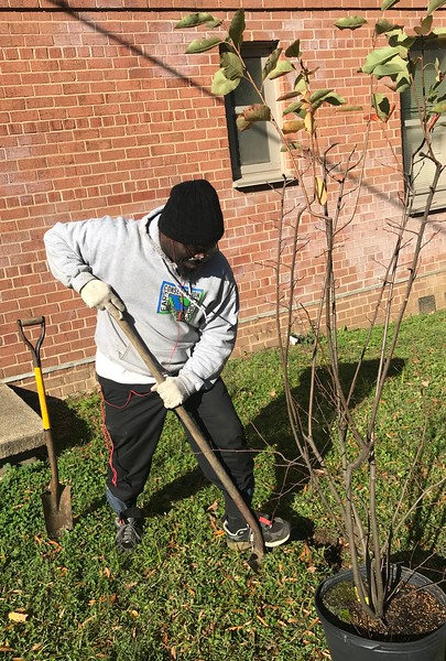 Syphax Gardens Tree Planting II