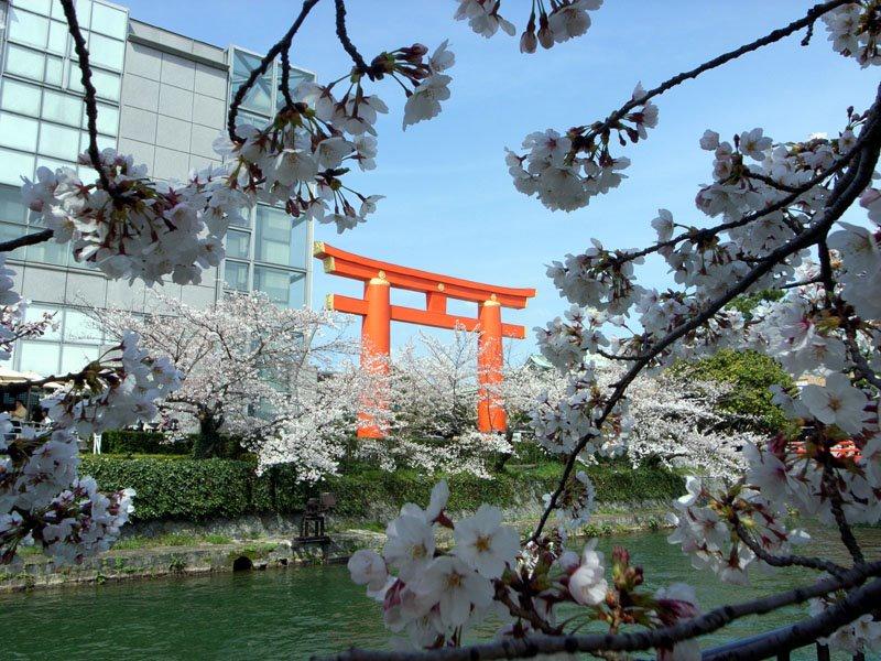 Heian-Jingu Torri with Cherries and Canal