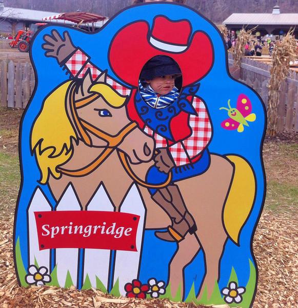 Good Friday adventure to Springridge Farms