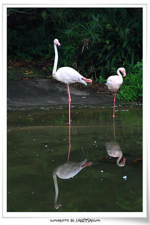 20121111 木柵動物園