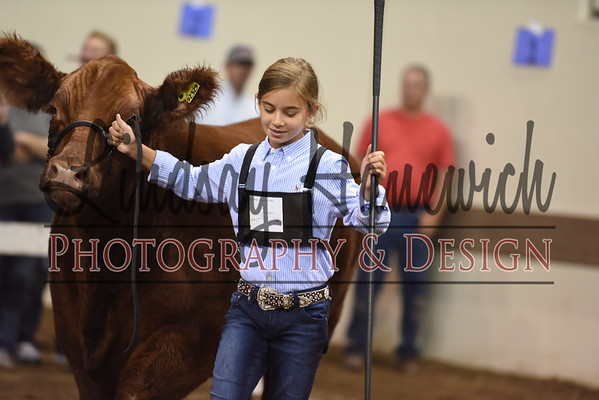 Ringshots - Chi-Hereford