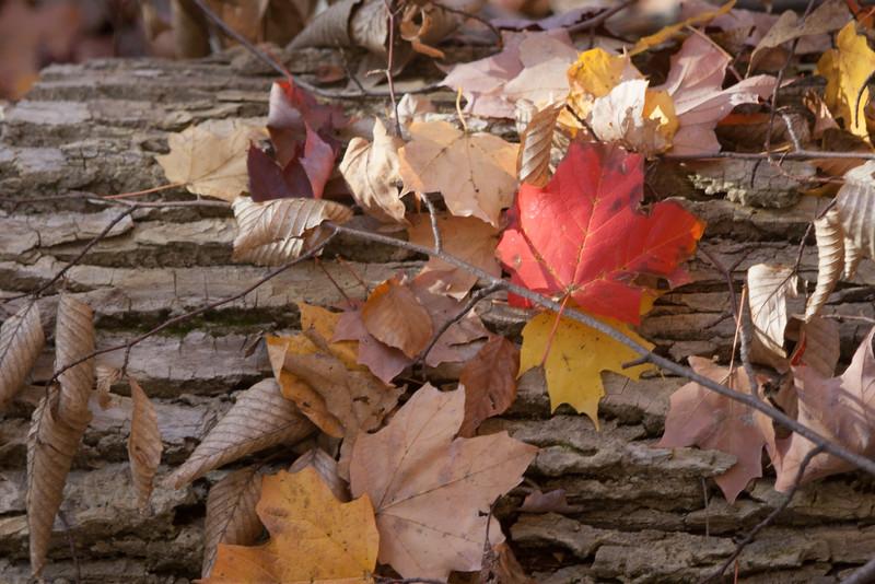 20121021-2012-10-2116-59-2413248.jpg