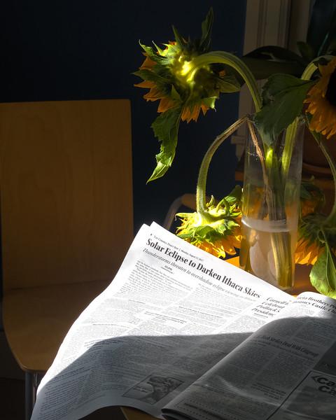 SunflowersHDR.jpg