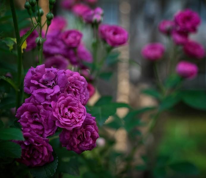 garden_may03-5030048 copy.jpg