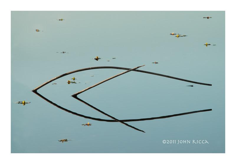 Fish (16 x 24).jpg