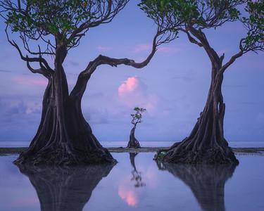 Sumba trees